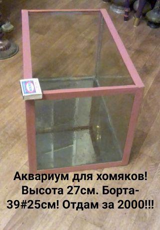 Недорогой аквариум