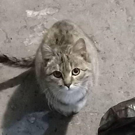 Котейки бесплатно