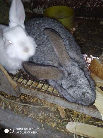 Кролики  два с половиной месяца.
