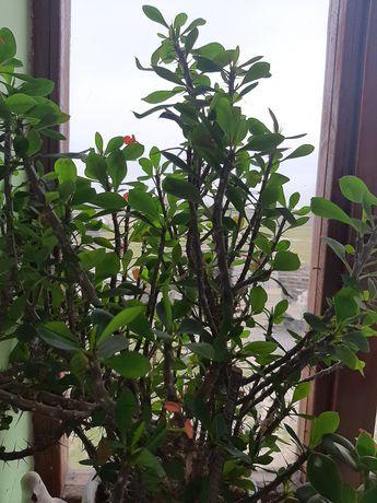 Домашний растения