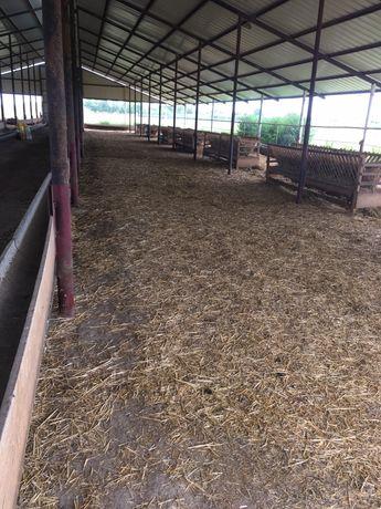 Vand sau inchiriez ferma pentru cresterea animalelor
