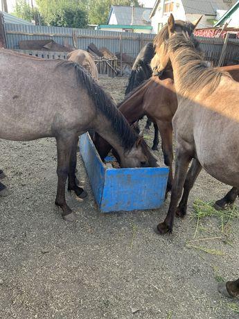 Продаються лошади с откорма