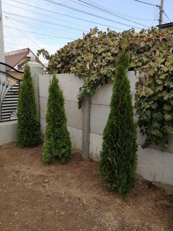 Plante ornamentale pentru gradina curtea dvs