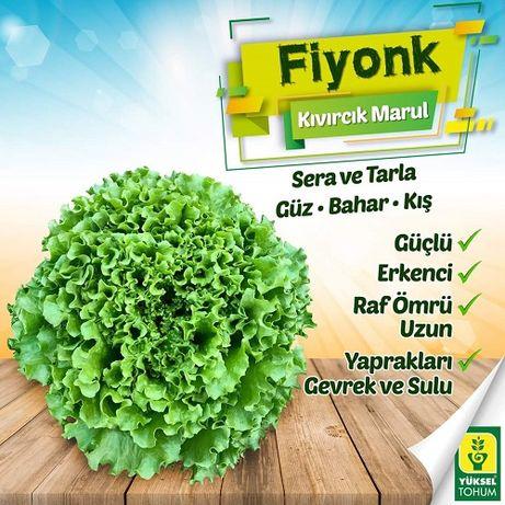 Rasad salata / Rasaduri de salata verde Shangore F1 si Fiyonk F1
