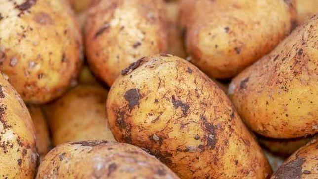 """Cartof consum mare tip """"Sante"""" 5000Kg"""