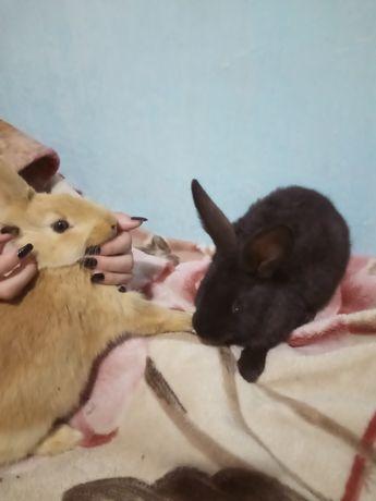 Кролики продам по 2000.