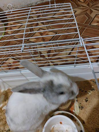 Домашний ручной кролик