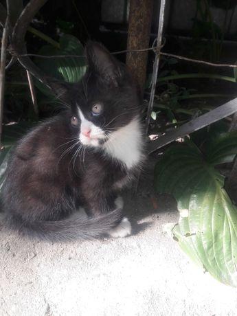 Котик, 2 месяца.