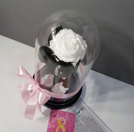 Роза в колбе подарок