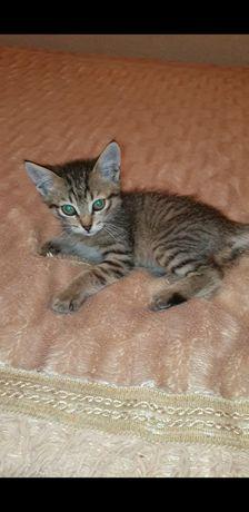 Котёнок (мальчик),нашли его неделю назад, примерно 2-3 месяца.