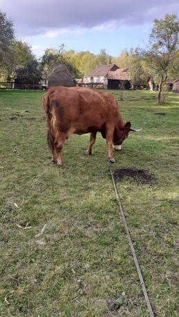 De vânzare  vaca