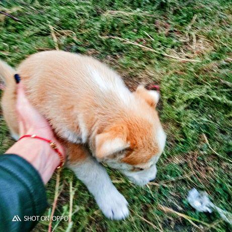 Отдам щенка в хорошие руки!!!