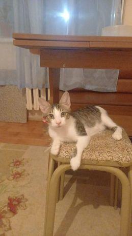 Котёнок Марғаулар