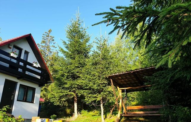 Inchiriez cabana Statiunea Muntele Baisorii, Buscat- Revelion/Craciun