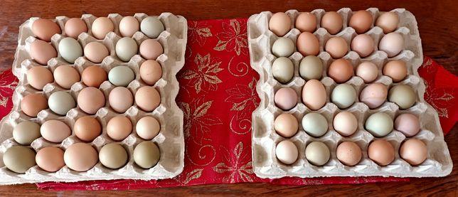 Ouă de țară      .