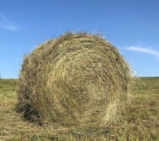 Продам сено в рулонах 10000 тенге
