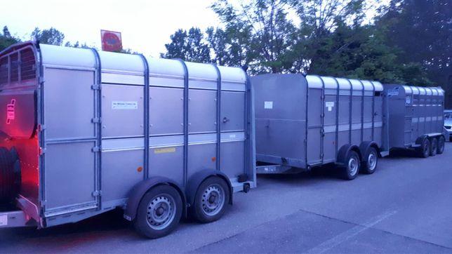 Transport animale vii autorizat