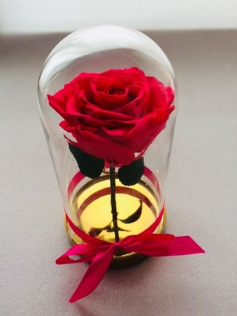 Trandafir criogenat rosu in cupola de sticla
