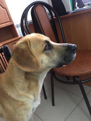 Пёс ищет хозяина