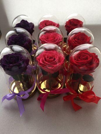 Trandafir criogenat XXL