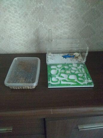 Продам муравьиная ферма