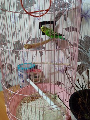 Продам попугайя с клеткой и кормом