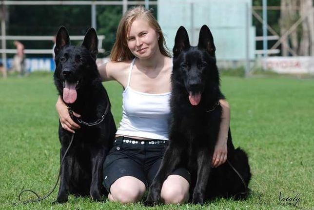 Подрощенные щенки немецкой овчарки от привозных производителей