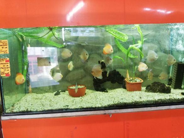 Зоомагазин Акваристика продава декоративни скариди и рибки