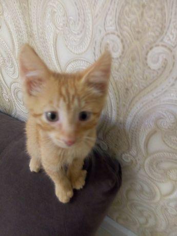 Котенок маленький