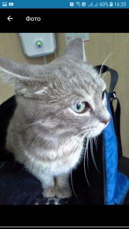 Кошечка стерелизованая