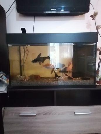 Acvariu cu pești!