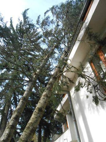 рязане на опасни дървета  .рязане на храсти и косене