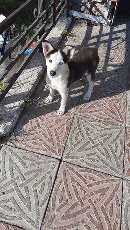 Найден щенок. Ищем хозяина