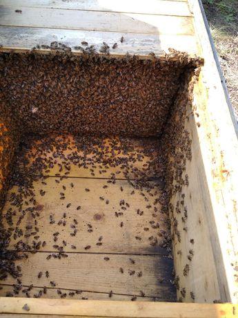 Vând 40 familii cu albine