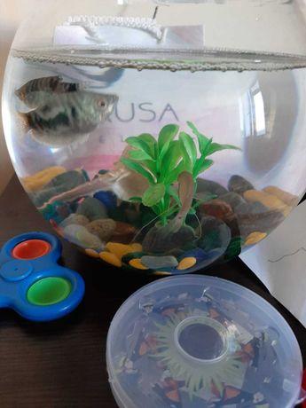 Аквариум 3 мя рыбками