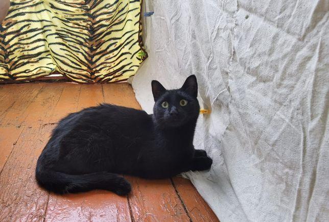 Пропал кот в базе отдыха Борок ВКМЗ.