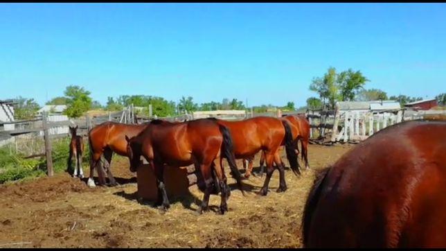 Продам лошадей с жеребятами
