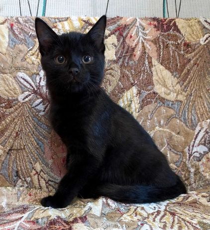 Отдам котенка (мальчик) добрым, заботливым людям, любящих животных