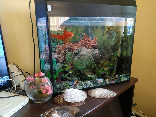 Продам аквариум с рыбкой