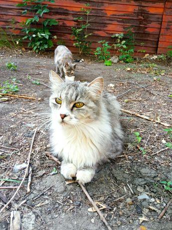 кот бруталл ищет заботливого друга