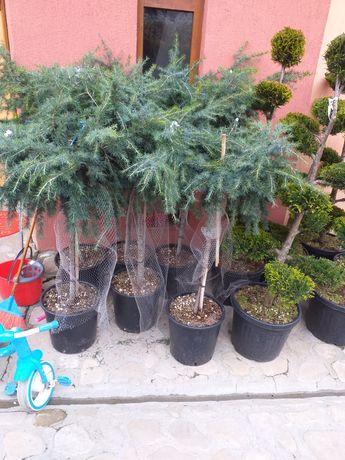 Gazon   plante ornamentale cascade grătare de grădină de diferite mode