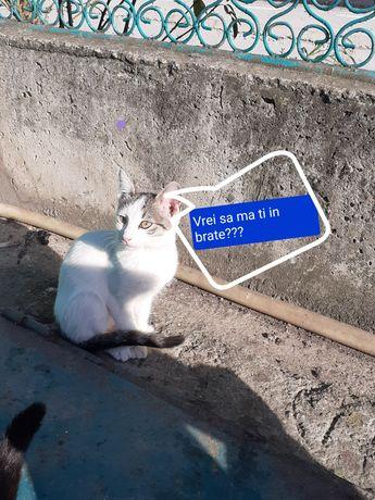 Pisicuti pentru adoptie