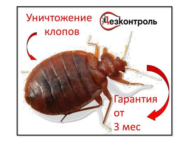 дезинфекция, уничтожение! насекомых, грызунов защити себя, и свой дом!