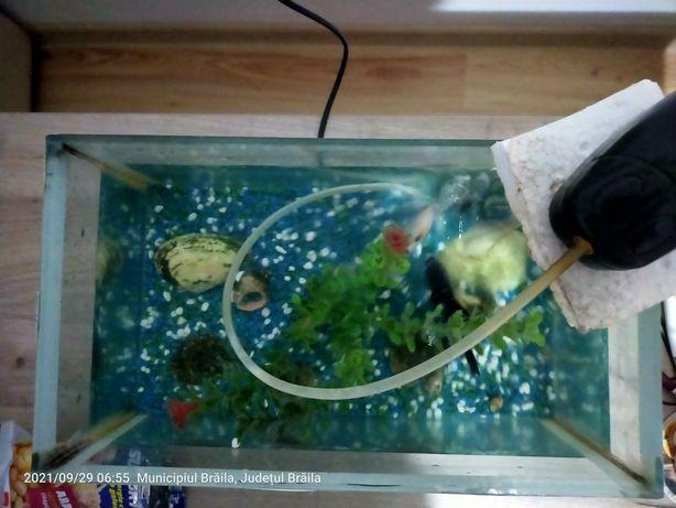 Acvariu cu peștisori