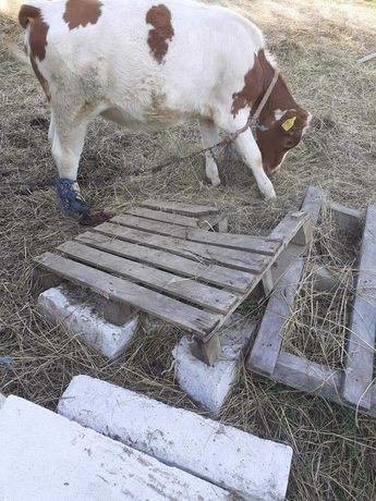 De vanzare 2 vitele sau schimb cu o juninca