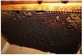 vand FAGURI VECHI (rame vechi) din familii de albine