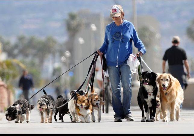Выгул собак всех пород
