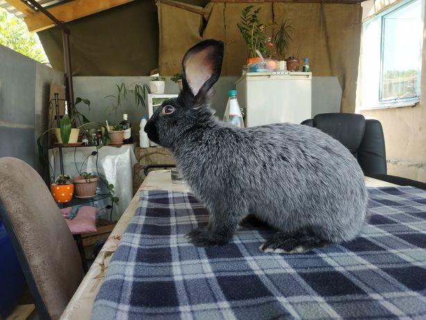 Продам кроликов разного возраста цена от 2000тза кг