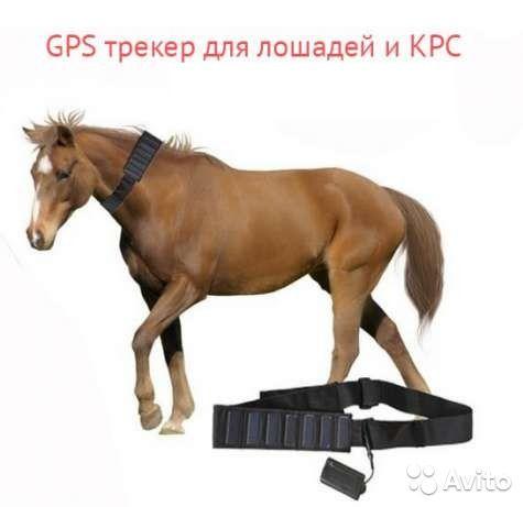 GPS для лошадей , баранов , коров.