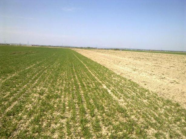 Vând Teren Agricol Cateasca
